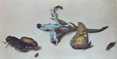 Iris with four beetles and a butterfly