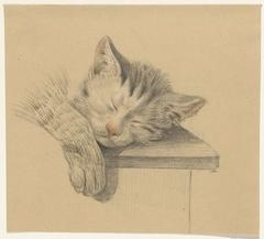 Kop en pootje van een slapende kat