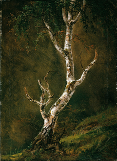 Study of a Birch Tree