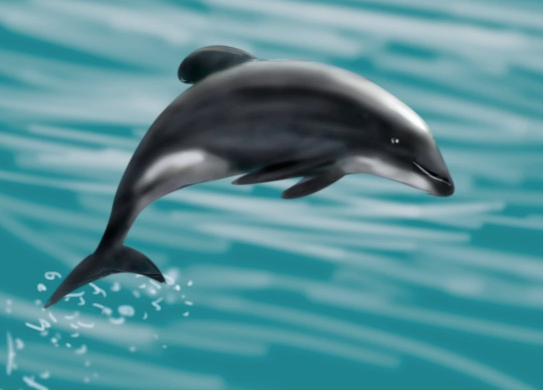 the Maui Dolphin - Critically Endangered
