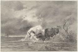 Twee vechtende stieren in een rivierlandschap