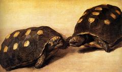 Two dueling tortoises