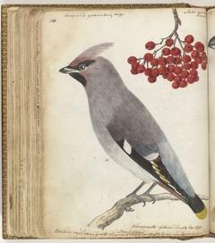 Zweedse vogel