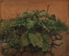 A Burdock and Other Plants on a Stone Wall