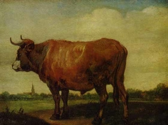 A Red Ox Standing