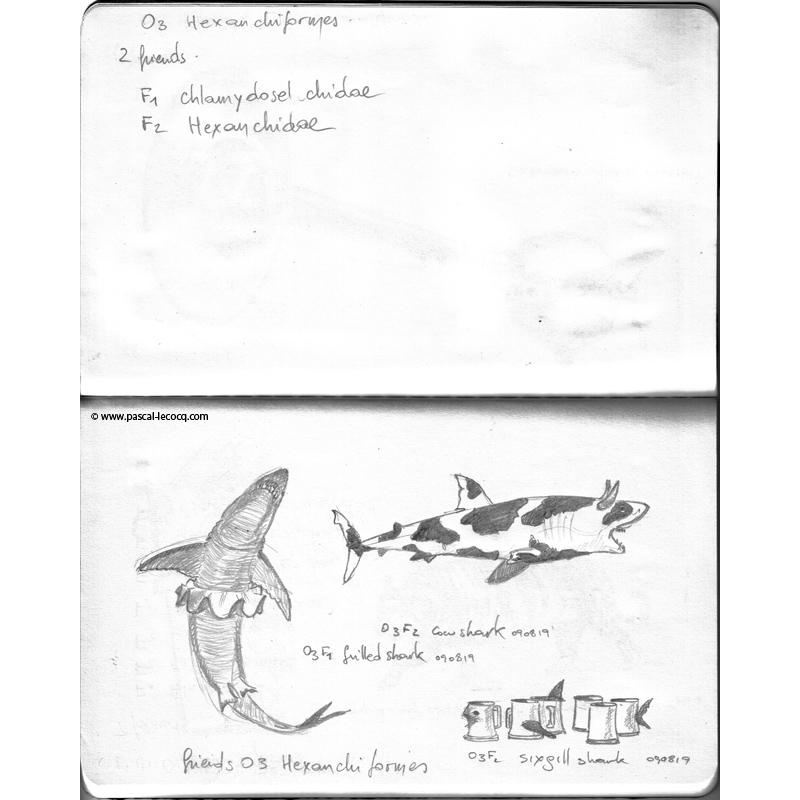 Carnet Bleu: Encyclopedia of…shark, vol.I p05 - by Pascal