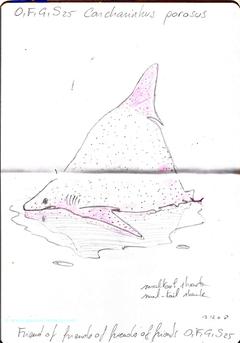 Carnet Bleu: Encyclopedia of…shark, vol.XII p6 - by Pascal