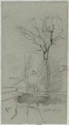 Landschap met hoge boom