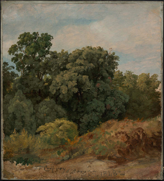 Study of a Clump of Trees