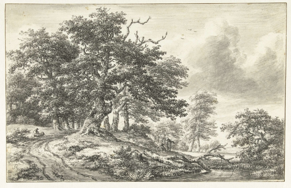 Boslandschap met grote boom