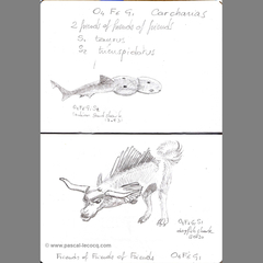 Carnet Bleu: Encyclopedia of…shark, vol.VI p16 by Pascal
