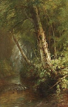 Forest Interior - The Old Birch Tree