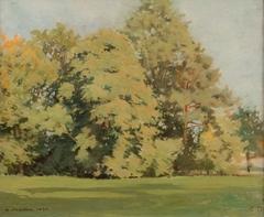 Grands arbres dans un parc