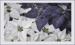 Harmony in white and purple