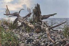 Tidal Roots