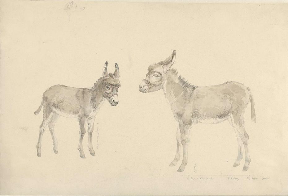 Twee ezels