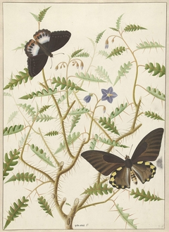 Two Exotic Butterflies on a Blooming Bush