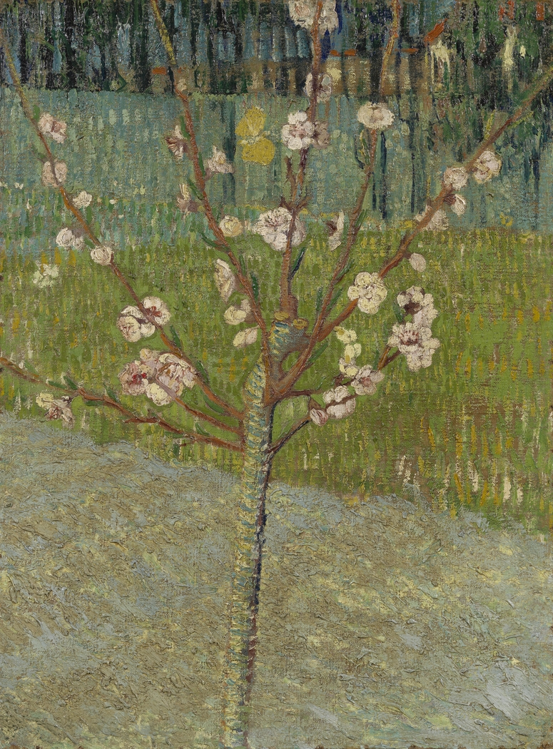 Almond Tree in Blossom