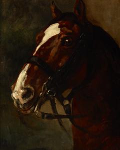 Bay Horse's Head