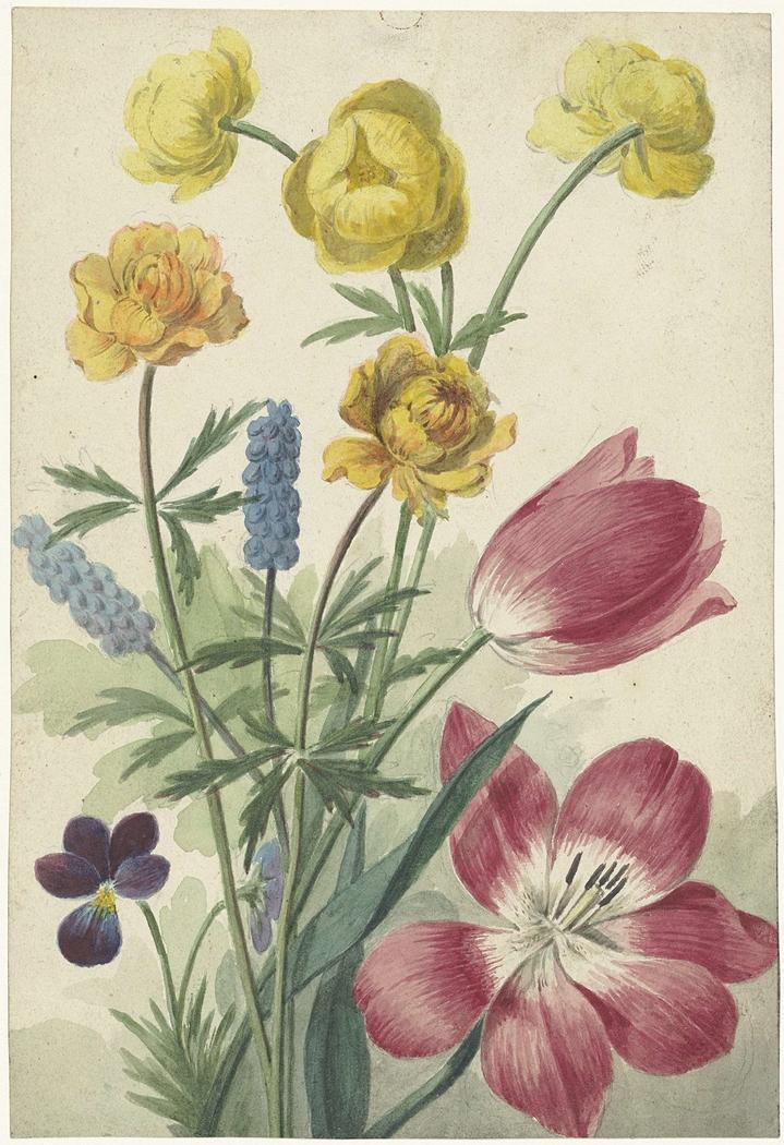 Boeket van tulpen, viooltjes, blauwe druifjes en dotters