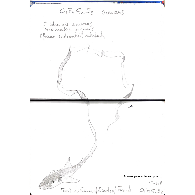 Carnet Bleu: Encyclopedia of…shark, vol.XIV p28 - by Pascal