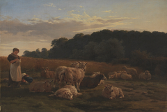 En fåreflok. Motivet fra Faxingeskoven ved Nysø