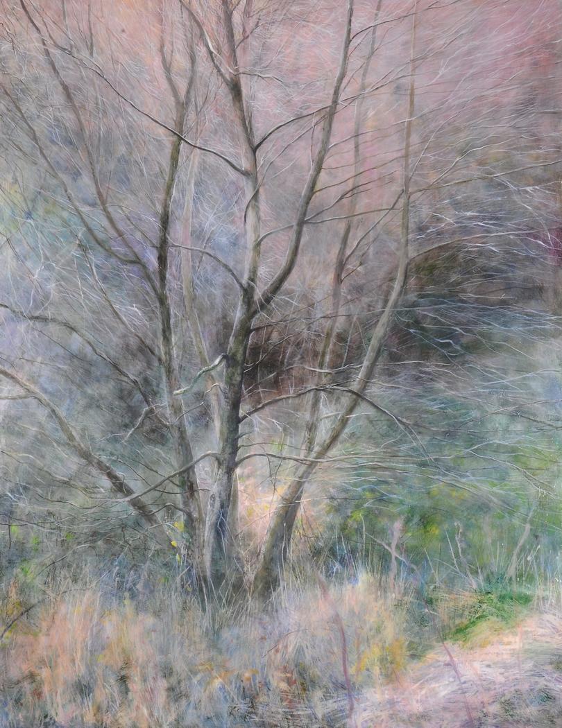 Light, Tree, North Wales