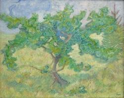 Little oak tree