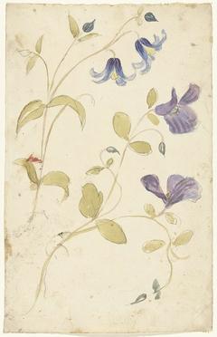 Studies of Purple and Blue Flowers