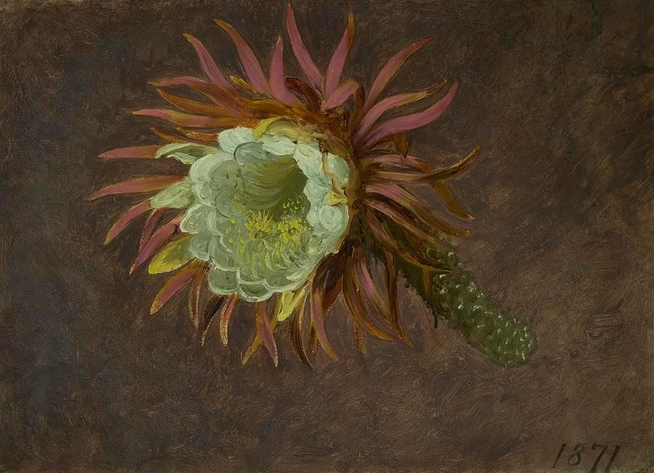 Study of a Night-Blooming Cereus