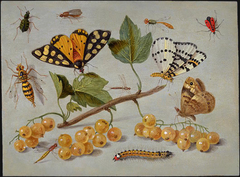Study of Butterfly and Insects