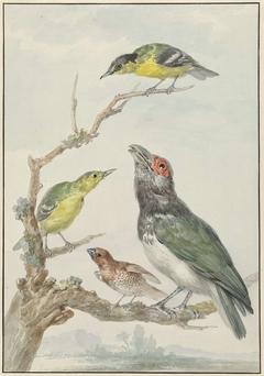 Vier verschillende vogels op een tak, waaronder een Muskaatvink (Lonchura punctulata)