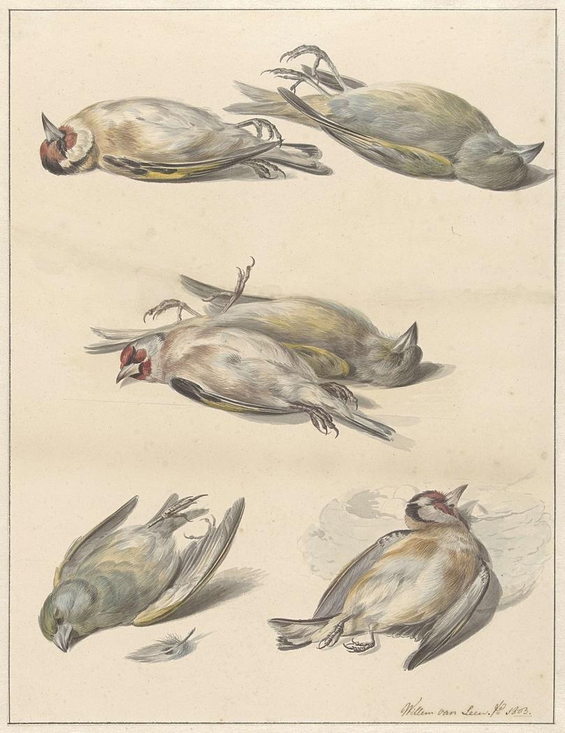 Zes dode vogeltjes