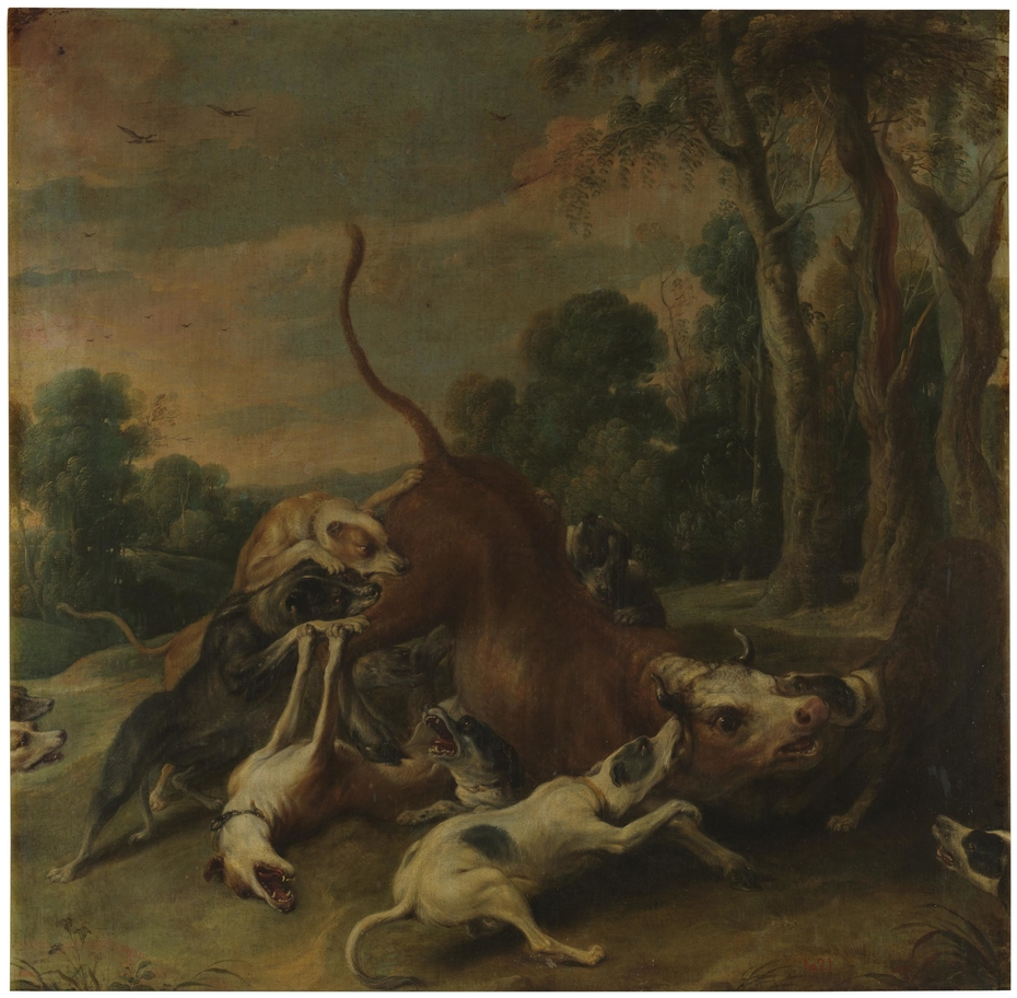 A bull overpowered by dogs