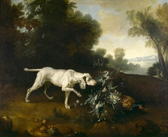 A Dog pointing a Pheasant in a Landscape