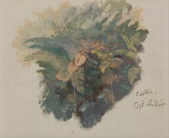 A Study of Ferns, Civitella