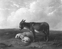 Ezel en schapen