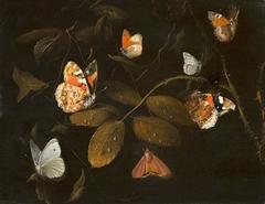 Six Butterflies and a Moth on a Rose Branch (Sept Papillions sur une Branche de Rosier)