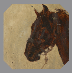 Study of the Horse's Head