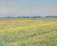 The plain of Gennevilliers, yellow fields