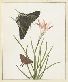 Twee vlinders bij een lelie