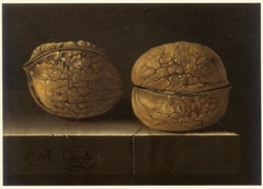 Two Walnuts