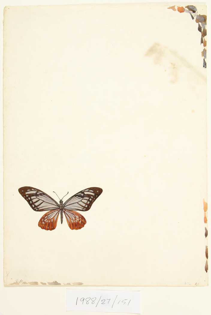 Untitled (Butterfly)